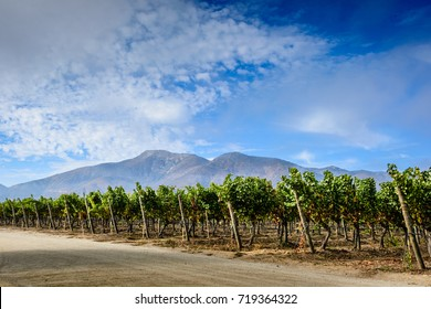 Vineyard landscape Casablanca Valley, mountains and blue cloudy sky ,Chile