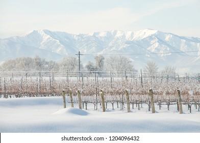 Vineyard landscape in heavy snow, Tohoku, Japan.