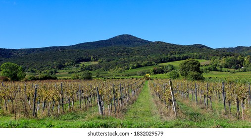 Vineyard landscape in October at Soss (between Baden und Bad Voeslau), a popular excursion place for hiking and vining.  - Shutterstock ID 1832029579