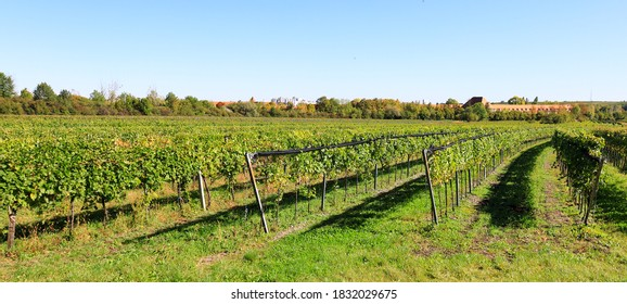 Vineyard landscape in October at Soss (between Baden und Bad Voeslau), a popular excursion place for hiking and vining.  - Shutterstock ID 1832029675