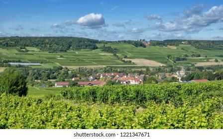 Vineyard Landscape in Rhinehessen Wine region near Ingelheim am Rhein,Rhineland-Palatinate,Germany