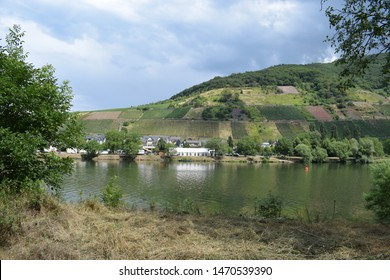 vineyard landscape with a small village in Moselle valley