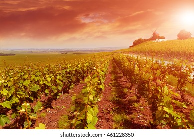 Vineyard landscape at sunset, Montagne de Reims, France