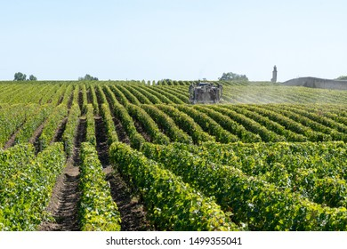 Vineyard landscape tractor spraying of grapevines in Margaux Medoc near Bordeaux France