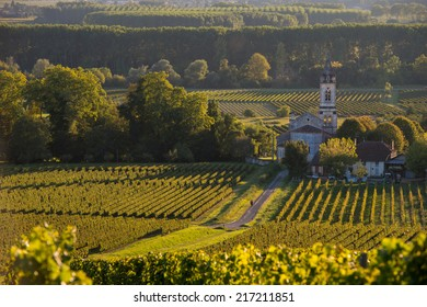 Vineyard landscape-Vineyard south west of France-Sauternes-Loupiac