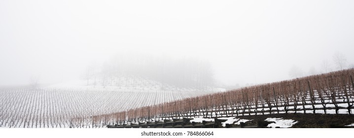 vineyard Langhe Italy in winter at the foot of mountain covered with snow and light fog