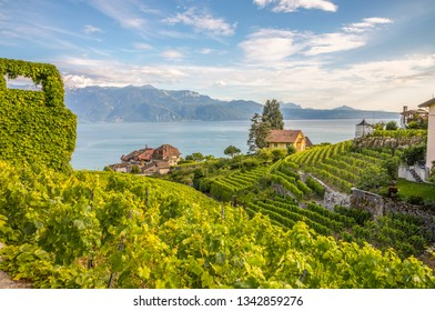 Vineyard of Lavaux in Switzerland with the Geneva lake and the French Alps