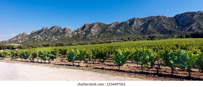 Vineyard in the Les Alpilles Region in St. Remy de Provence. Buches du Rhone, Provence, France.