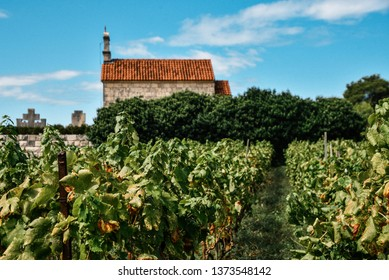 Vineyard in Lumbarda on Korcula Island Along the Dalmatian Coast of Croatia