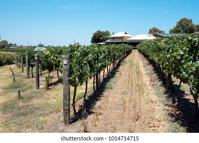 Vineyard at the Margaret River region of Perth, Western Australia. Sunny climate.