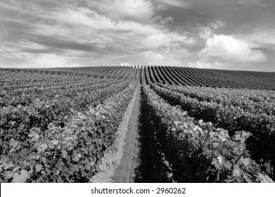 Vineyard in Matakana, New Zealand (check out other shots of this vineyard in my portfolio!)