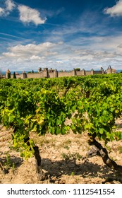 Vineyard with the medieval fortified citadel behind, Carcassonne, Languedoc-Roussillon, France