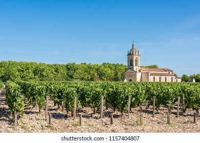 Vineyard in Medoc (France), a famous wine-producing region near Bordeaux