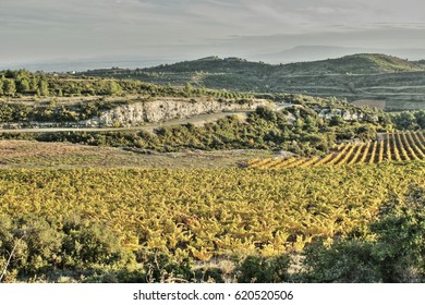 Vineyard in Minervois, Aude, Occitanie in south of France