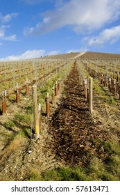 vineyard, Moet et Chandon, Ay, Champagne Region, France