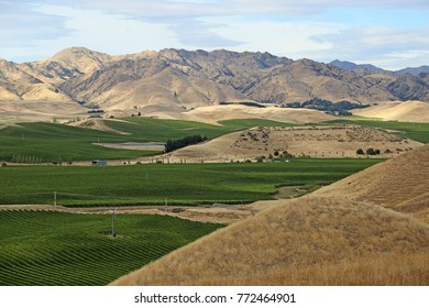 Vineyard and the mountains  - New Zealand