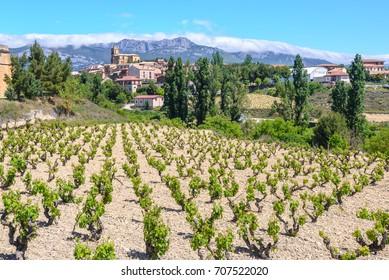 Vineyard with Navaridas as background, Rioja Alavesa, Spain