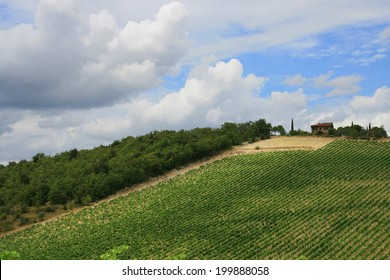 Vineyard near Pienza, Tuscany, Italy.