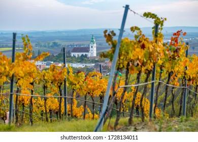 viñedo cerca de Unterretzbach en la región de Weinviertel, Baja Austria, Austria