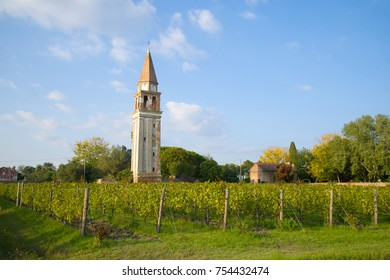 Vineyard and the old bell tower on the Mazzorbo island. Venice, Italy