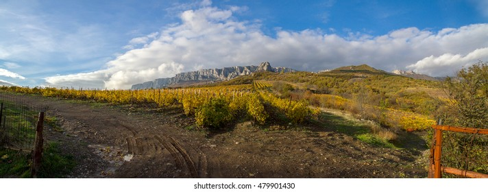 Vineyard on a background of mountains and sky