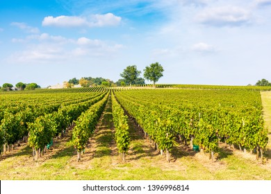 Vineyard on bright summer day under blue sky with white clouds in Saint Emilion area, Bordeaux, France