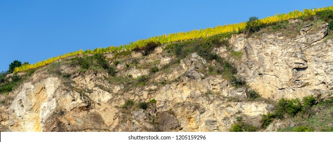 vineyard on a hill of Loess with rocky steep face in the section Wachau of the Danube valley, Austria