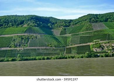 A vineyard on riverside of Rhine