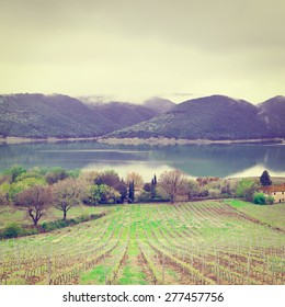 Vineyard on the Shore of Italian Lake Corbara in a Rainy Day, Instagram Effect
