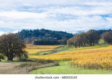 A vineyard in Oregon's coast range in the early fall.