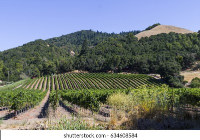 Vineyard outside Santa Rosa California