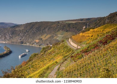 Vineyard over the Rhine valley, Germany