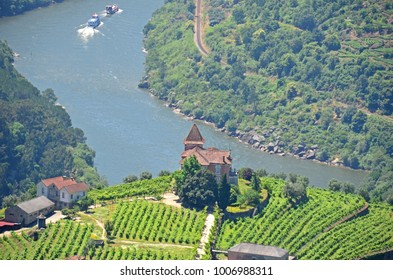A vineyard overlooking Portugal's biggest river The Douro, famous for winemaking