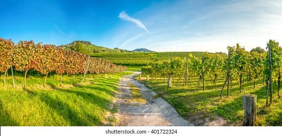Vineyard, Panorama