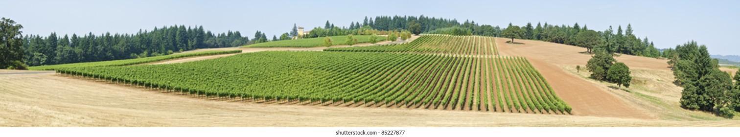 Vineyard Panorama of Willamette Valley Oregon