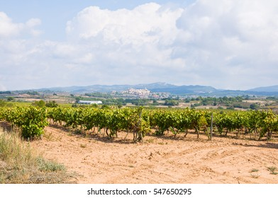 vineyard in perspective with White grapes hanging with rural town background with church and bell tower