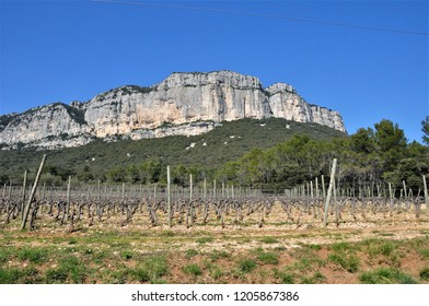 the vineyard of pic saint loup ,occitanie ,france