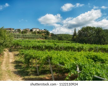 Vineyard plantation at the foot of the village of San Giorgio di Valpolicella area of production of famous DOCG wines. Verona Italy