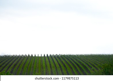 A vineyard is planted in verticla lines, giving stripes of bright green and brown against a cloudy sky.