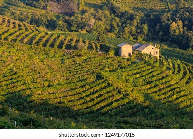 Vineyard Prosecco on hills of Valdobbiadene, Veneto, Italy