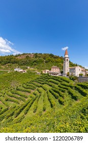 Vineyard Prosecco on the small town of Rolle, Valdobbiane , Veneto, Italy
