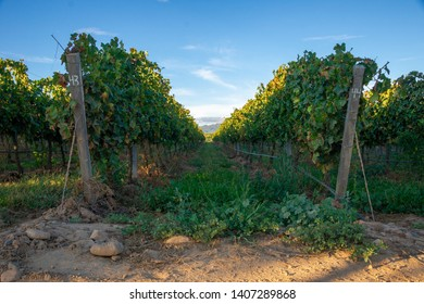 Vineyard rail at sunset in Tarija Bolivia with a blue sky background