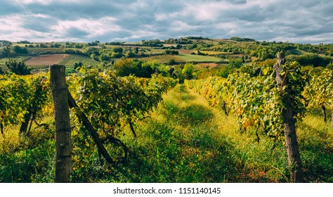 Vineyard region landscape in summer. Countryside with grape vines growing. Traditional winery and wine farm industry background.