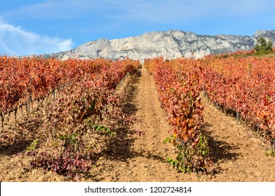 Vineyard at Rioja Alavesa, Cantabria mountain range as background, Basque Country, Spain