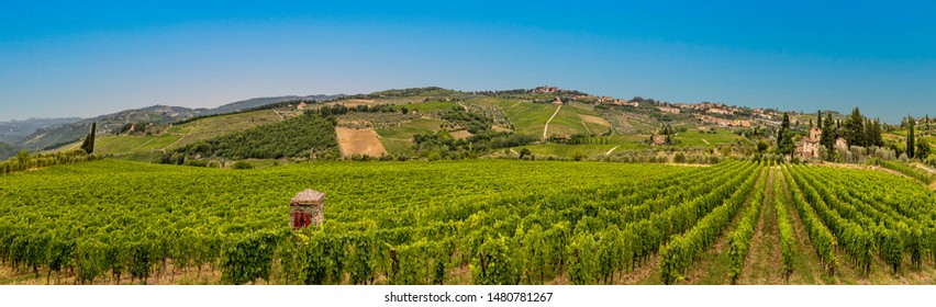 vineyard with ripe grapes in Greve in Chianti, Italy