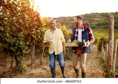 vineyard and ripe grapes- People working in vineyard