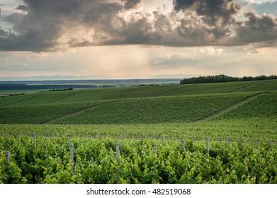 Vineyard road