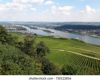 Vineyard at Ruedesheim, Germany