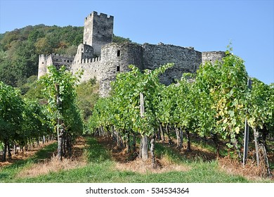 vineyard and ruins, Wachau, Austria, Europe