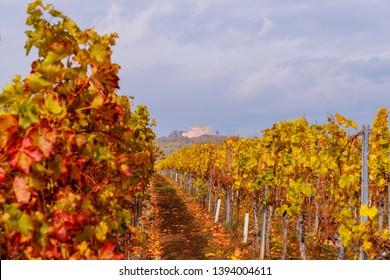 Vineyard Rural autumn landscape. Vineyards Palatinate region, Hambacher Schloss ( Hambach Castle ), Deutsche Weinstrasse ( German Wine Road ) in Rhineland-Palatinate, Germany